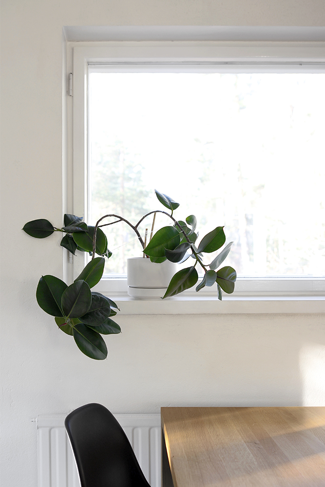kumiviikuna_ikkunalaudalla